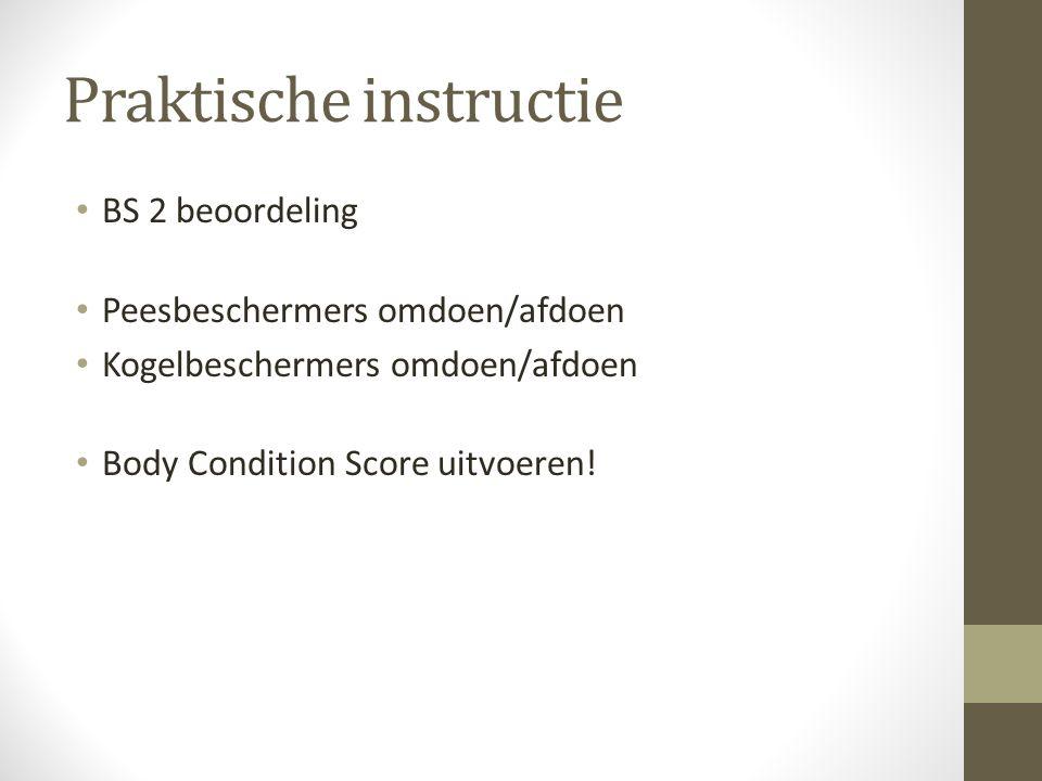 Praktische instructie BS 2 beoordeling Peesbeschermers omdoen/afdoen Kogelbeschermers omdoen/afdoen Body Condition Score uitvoeren!