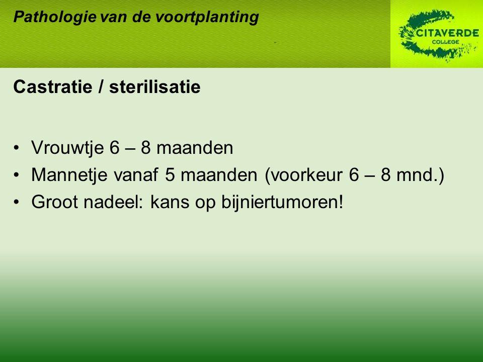 Castratie / sterilisatie Vrouwtje 6 – 8 maanden Mannetje vanaf 5 maanden (voorkeur 6 – 8 mnd.) Groot nadeel: kans op bijniertumoren.