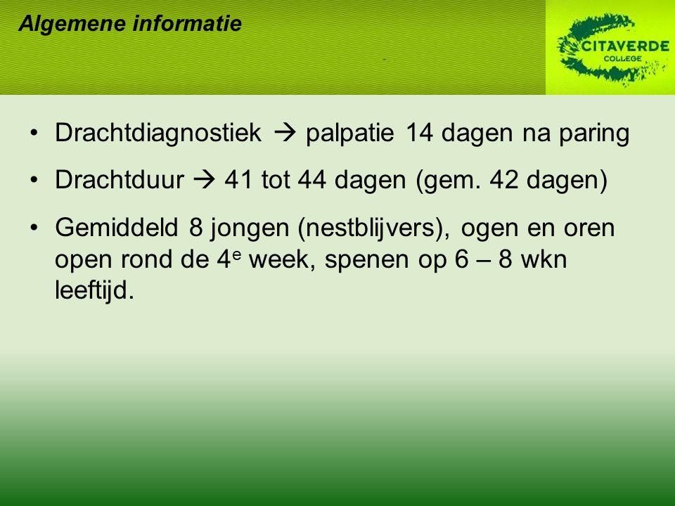 Drachtdiagnostiek  palpatie 14 dagen na paring Drachtduur  41 tot 44 dagen (gem.