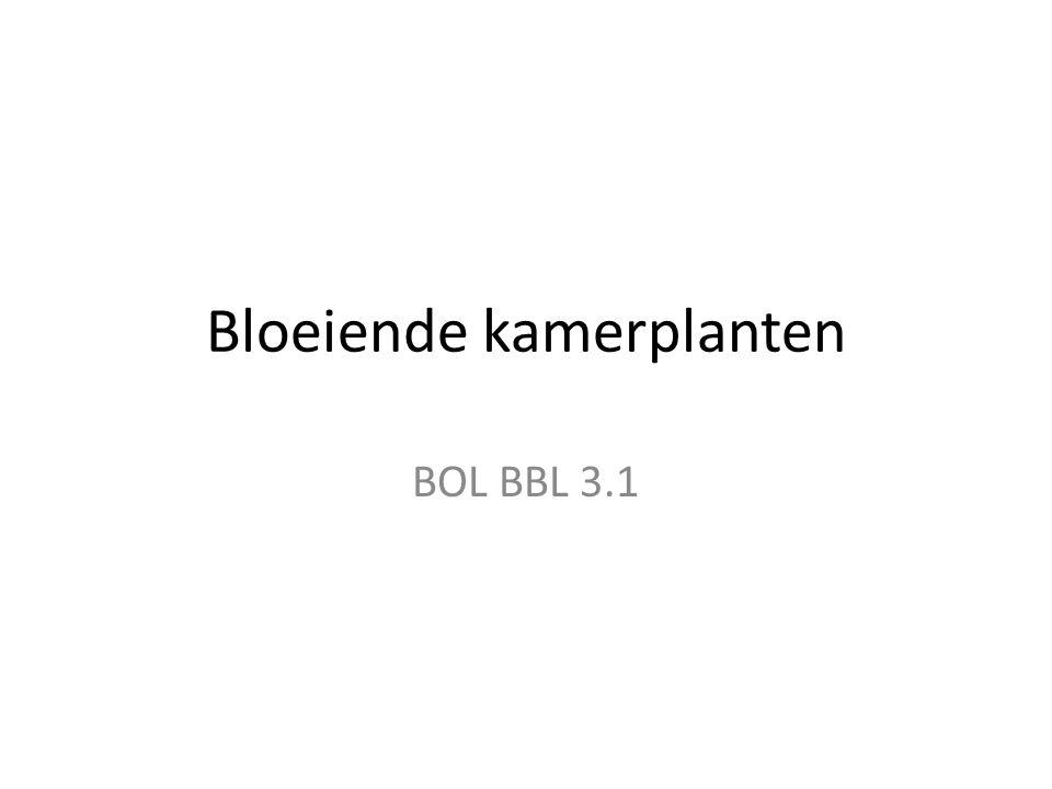 Bloeiende kamerplanten BOL BBL 3.1