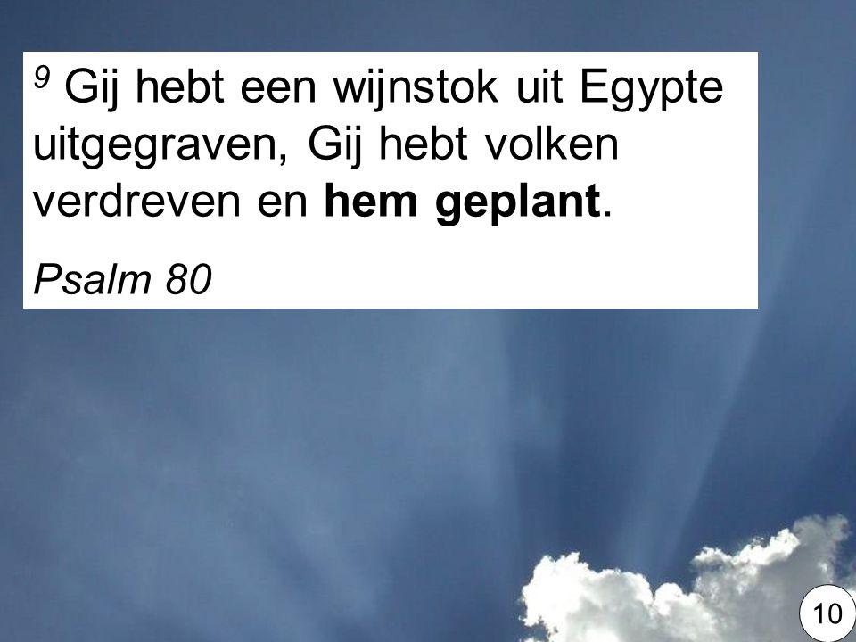 9 Gij hebt een wijnstok uit Egypte uitgegraven, Gij hebt volken verdreven en hem geplant.