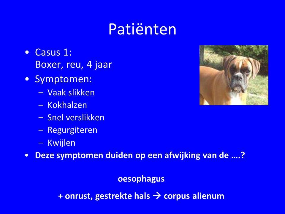 Meest voorkomende ziekten van de exocriene pancreas EPI ( exocriene pancreas insufficiëntie ): –Vooral D.
