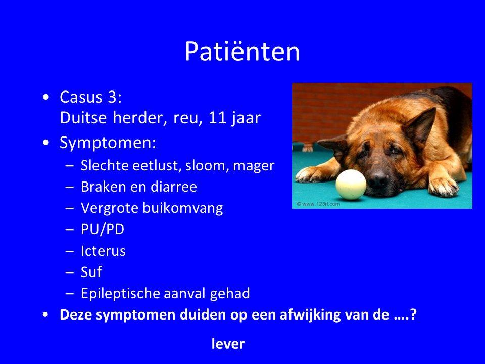 Patiënten Casus 4: Labrador, vrl,1 jaar Symptomen: –Braken –Diarree –Koliek –Slechte eetlust Deze symptomen duiden op een ziekte van de…..