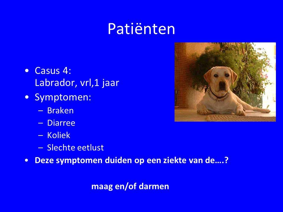 Patiënten Casus 5: Duitse herder, reu, 7 mnd Symptomen: –Polyfagie (= veel eten) –Doffe vacht –Vermageren –Veel breiïge zure ontlasting (stopverfkleurig); chronische diarree Deze symptomen duiden op een afwijking van de …..