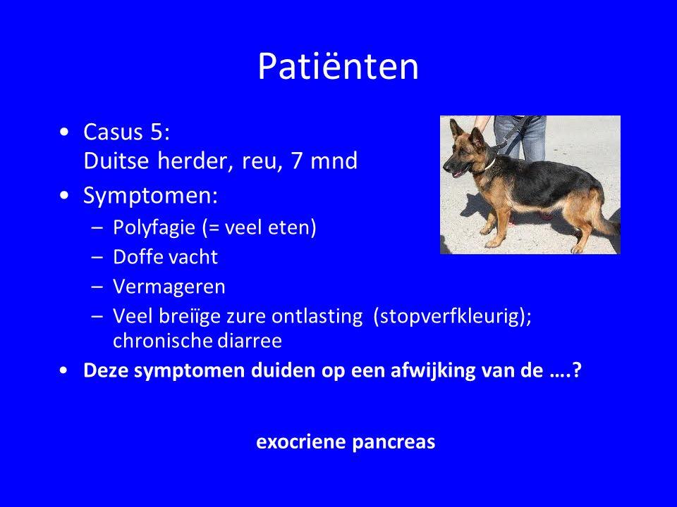 Patiënten Casus 6: Kat, vrl, 6 maanden; gisteren van balkon gevallen Symptomen: –Poes verzorgt zich niet –Eetlust heel matig, bij eten  niezen –Bij drinken  niezen, stopt met drinken Deze symptomen duiden op een aandoening van ……...