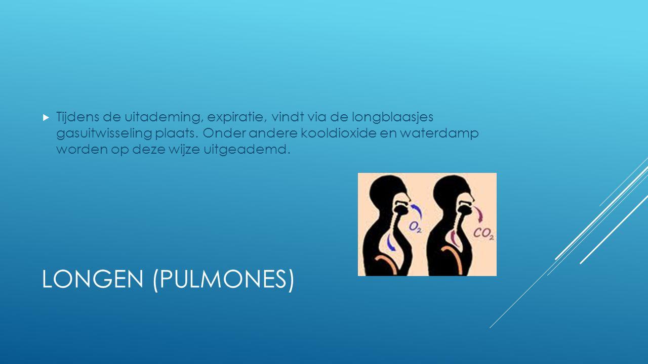 LONGEN (PULMONES)  Tijdens de uitademing, expiratie, vindt via de longblaasjes gasuitwisseling plaats. Onder andere kooldioxide en waterdamp worden o
