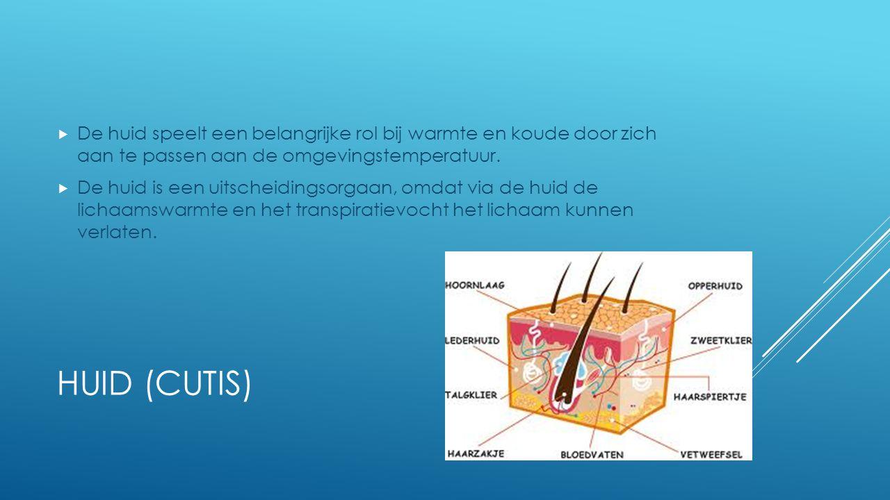HUID (CUTIS)  De huid speelt een belangrijke rol bij warmte en koude door zich aan te passen aan de omgevingstemperatuur.  De huid is een uitscheidi