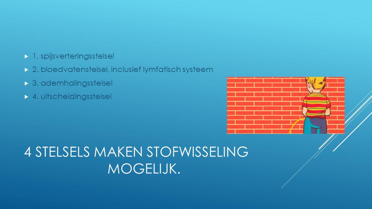 4 STELSELS MAKEN STOFWISSELING MOGELIJK.  1. spijsverteringsstelsel  2. bloedvatenstelsel, inclusief lymfatisch systeem  3. ademhalingsstelsel  4.