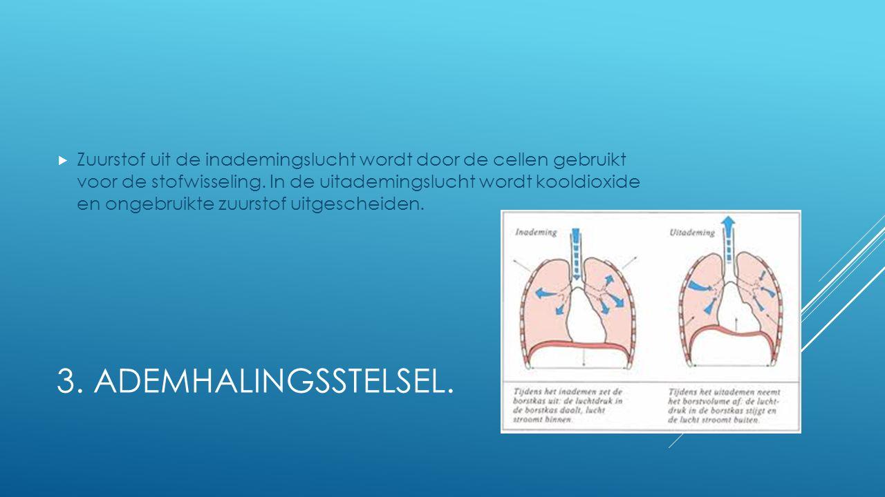3. ADEMHALINGSSTELSEL.  Zuurstof uit de inademingslucht wordt door de cellen gebruikt voor de stofwisseling. In de uitademingslucht wordt kooldioxide