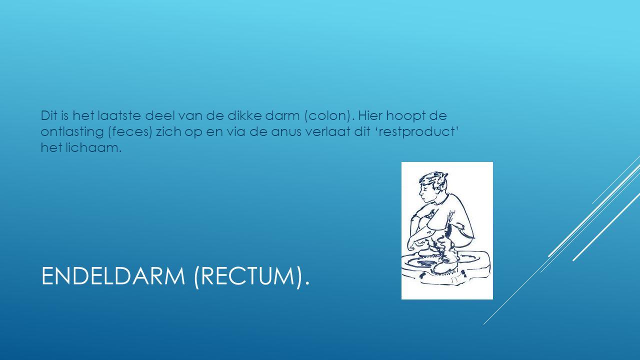 ENDELDARM (RECTUM). Dit is het laatste deel van de dikke darm (colon). Hier hoopt de ontlasting (feces) zich op en via de anus verlaat dit 'restproduc