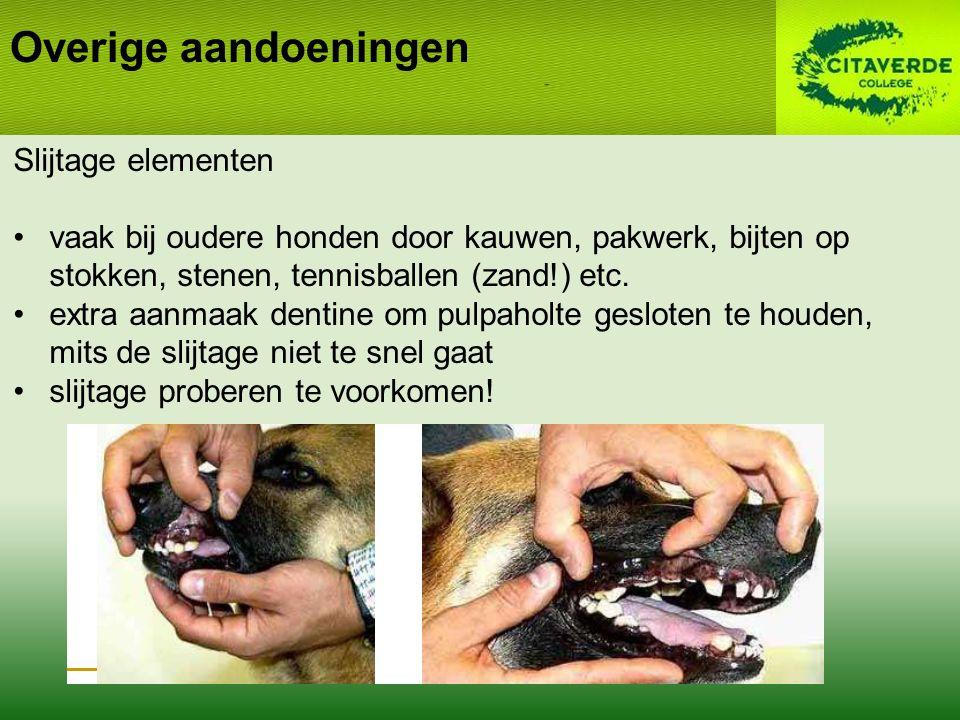 Overige aandoeningen Slijtage elementen vaak bij oudere honden door kauwen, pakwerk, bijten op stokken, stenen, tennisballen (zand!) etc. extra aanmaa