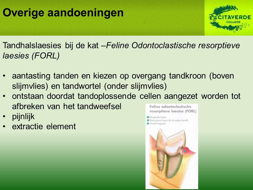 Overige aandoeningen Tandhalslaesies bij de kat –Feline Odontoclastische resorptieve laesies (FORL) aantasting tanden en kiezen op overgang tandkroon