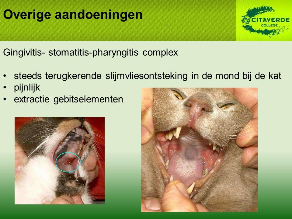 Overige aandoeningen Gingivitis- stomatitis-pharyngitis complex steeds terugkerende slijmvliesontsteking in de mond bij de kat pijnlijk extractie gebitselementen