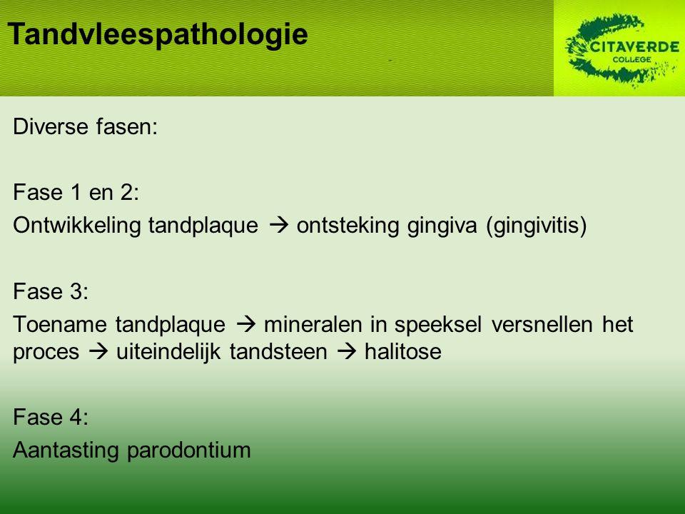 Diverse fasen: Fase 1 en 2: Ontwikkeling tandplaque  ontsteking gingiva (gingivitis) Fase 3: Toename tandplaque  mineralen in speeksel versnellen het proces  uiteindelijk tandsteen  halitose Fase 4: Aantasting parodontium Tandvleespathologie