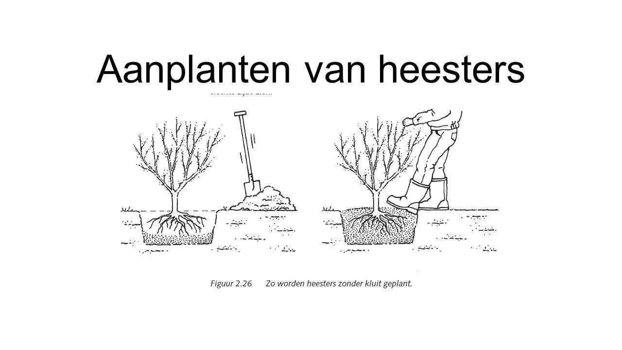 Aanplanten van heesters