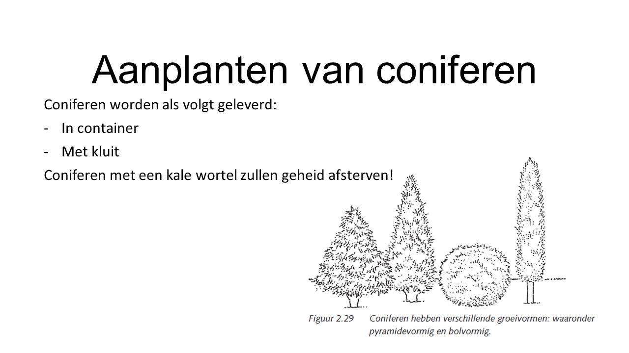 Aanplanten van coniferen Coniferen worden als volgt geleverd: -In container -Met kluit Coniferen met een kale wortel zullen geheid afsterven!