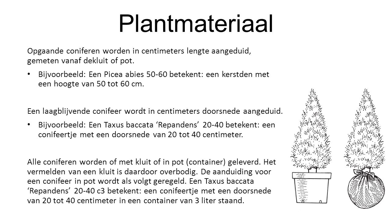Plantmateriaal Opgaande coniferen worden in centimeters lengte aangeduid, gemeten vanaf dekluit of pot. Bijvoorbeeld: Een Picea abies 50-60 betekent: