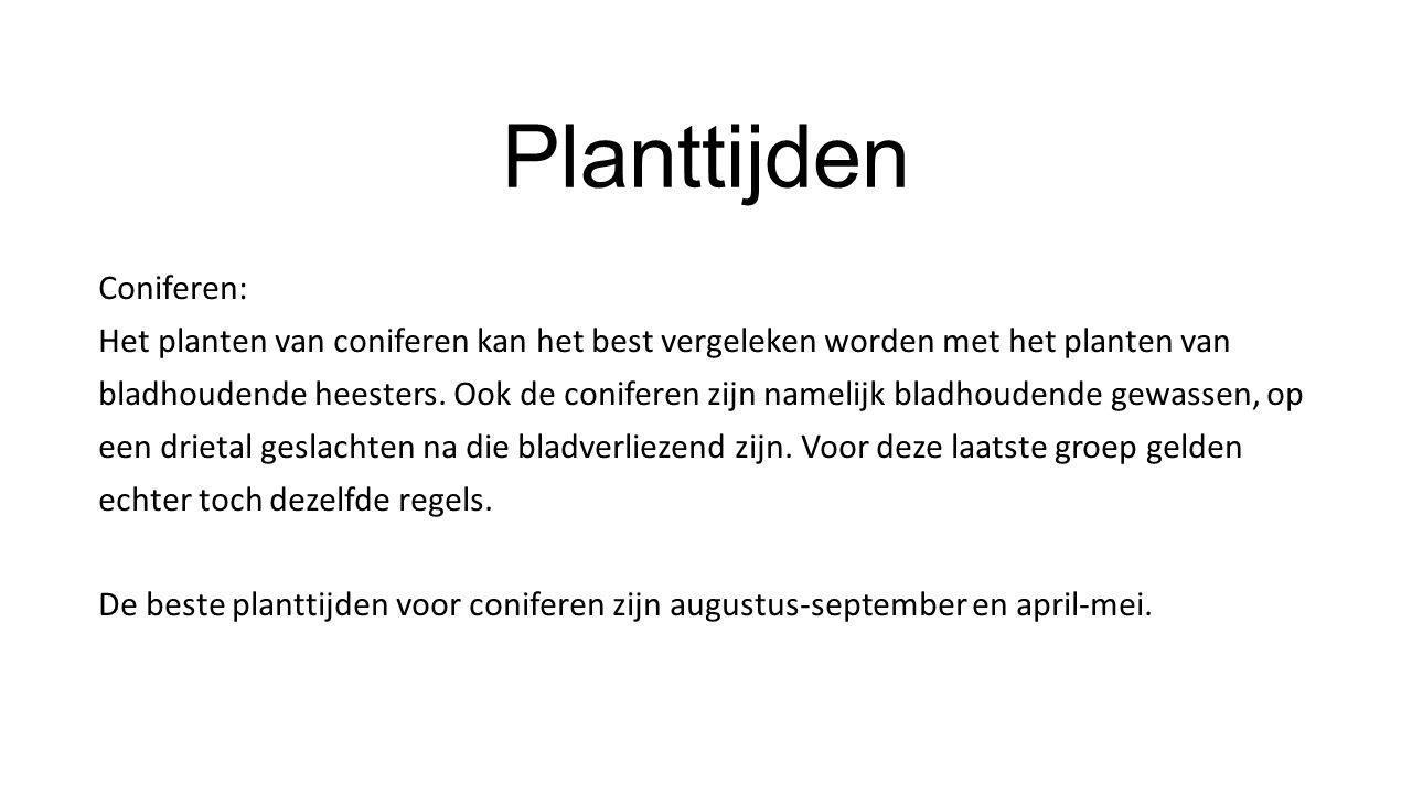 Planttijden Coniferen: Het planten van coniferen kan het best vergeleken worden met het planten van bladhoudende heesters. Ook de coniferen zijn namel