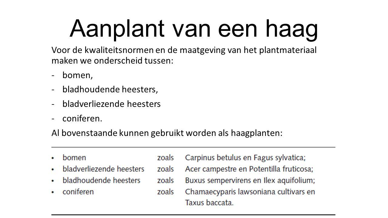 Aanplant van een haag Voor de kwaliteitsnormen en de maatgeving van het plantmateriaal maken we onderscheid tussen: -bomen, -bladhoudende heesters, -b