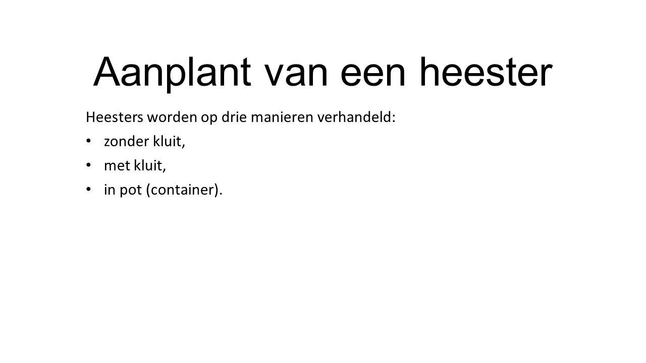 Aanplant van een heester Heesters worden op drie manieren verhandeld: zonder kluit, met kluit, in pot (container).