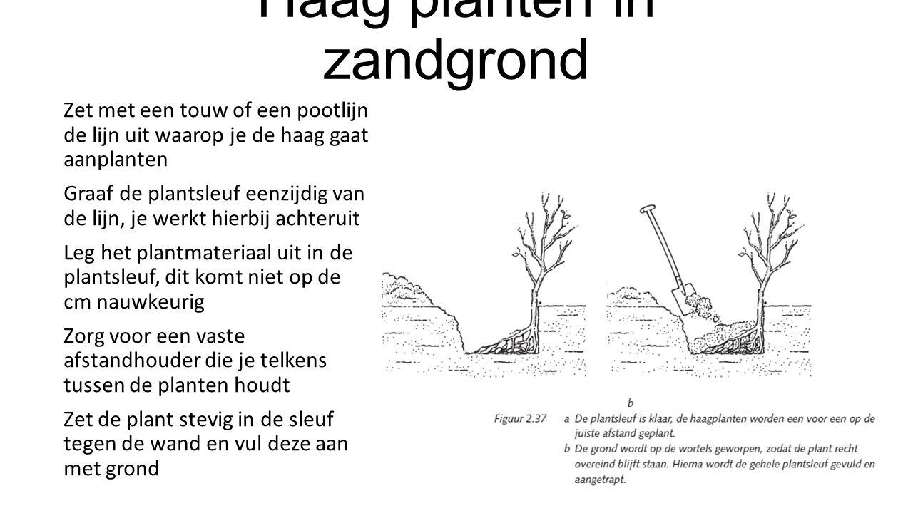 Haag planten in zandgrond Zet met een touw of een pootlijn de lijn uit waarop je de haag gaat aanplanten Graaf de plantsleuf eenzijdig van de lijn, je