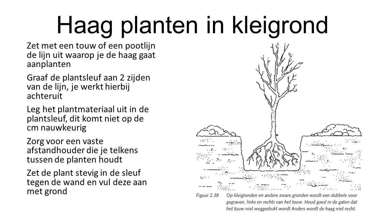 Haag planten in kleigrond Zet met een touw of een pootlijn de lijn uit waarop je de haag gaat aanplanten Graaf de plantsleuf aan 2 zijden van de lijn,