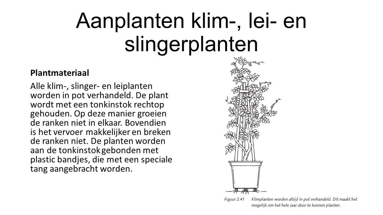 Aanplanten klim-, lei- en slingerplanten Plantmateriaal Alle klim-, slinger- en leiplanten worden in pot verhandeld. De plant wordt met een tonkinstok