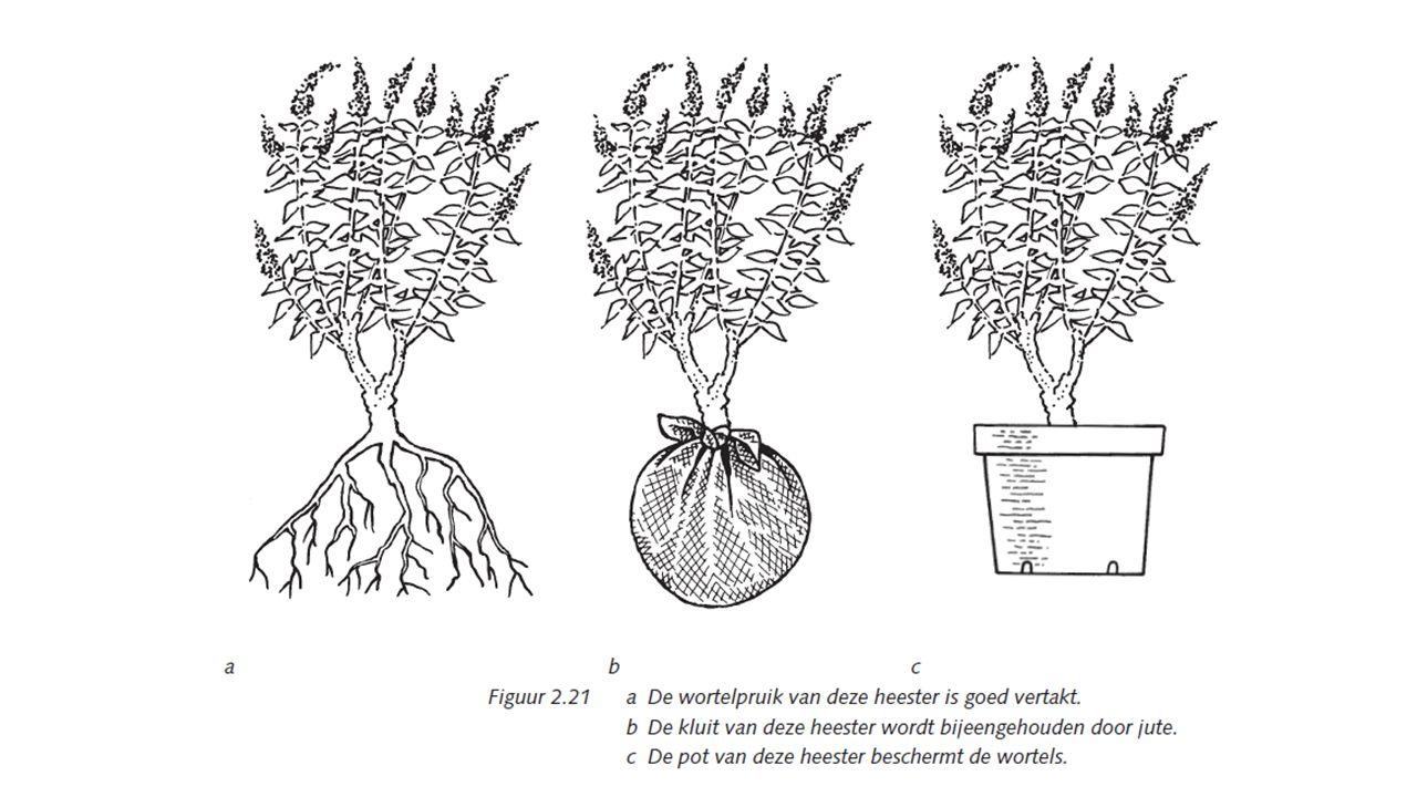 Aanbinden Klimplanten groeien vaak in het begin niet in het aangebrachte klimmateriaal.