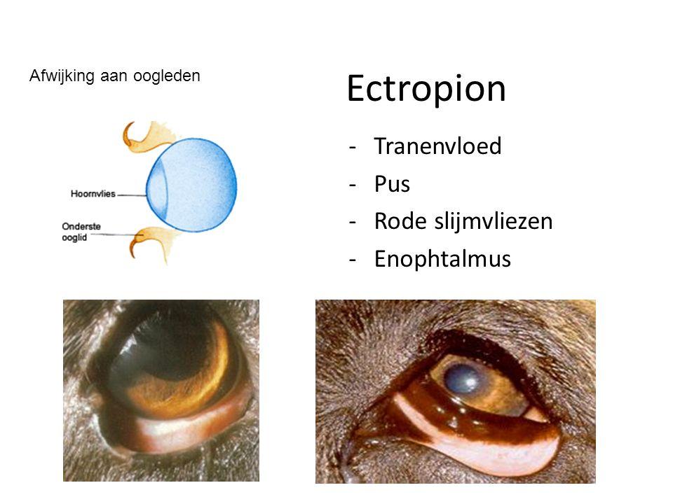 Ectropion -Tranenvloed -Pus -Rode slijmvliezen -Enophtalmus Afwijking aan oogleden