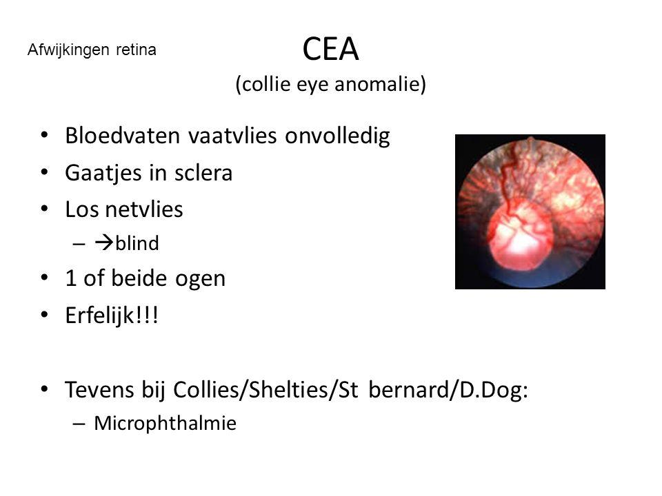 CEA (collie eye anomalie) Bloedvaten vaatvlies onvolledig Gaatjes in sclera Los netvlies –  blind 1 of beide ogen Erfelijk!!! Tevens bij Collies/Shel