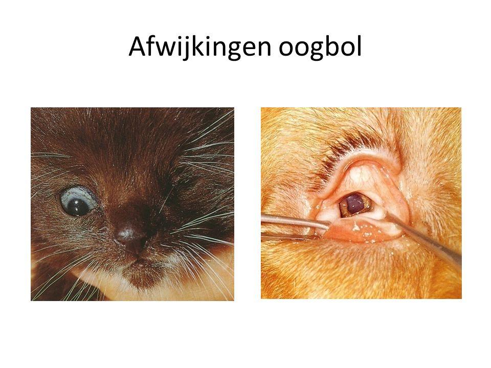 Afwijkingen oogbol