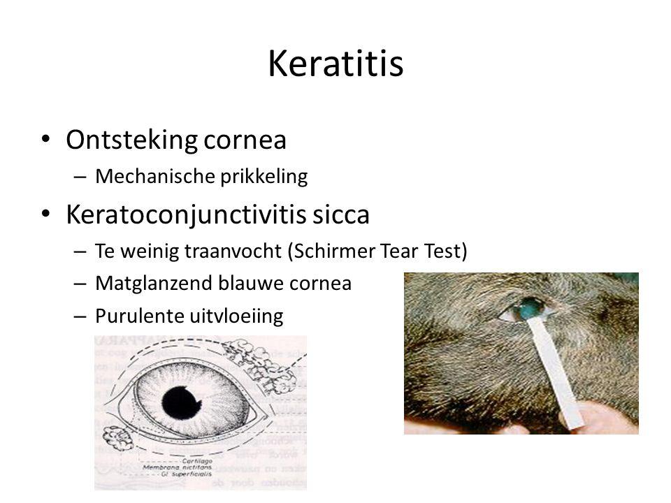 Keratitis Ontsteking cornea – Mechanische prikkeling Keratoconjunctivitis sicca – Te weinig traanvocht (Schirmer Tear Test) – Matglanzend blauwe corne