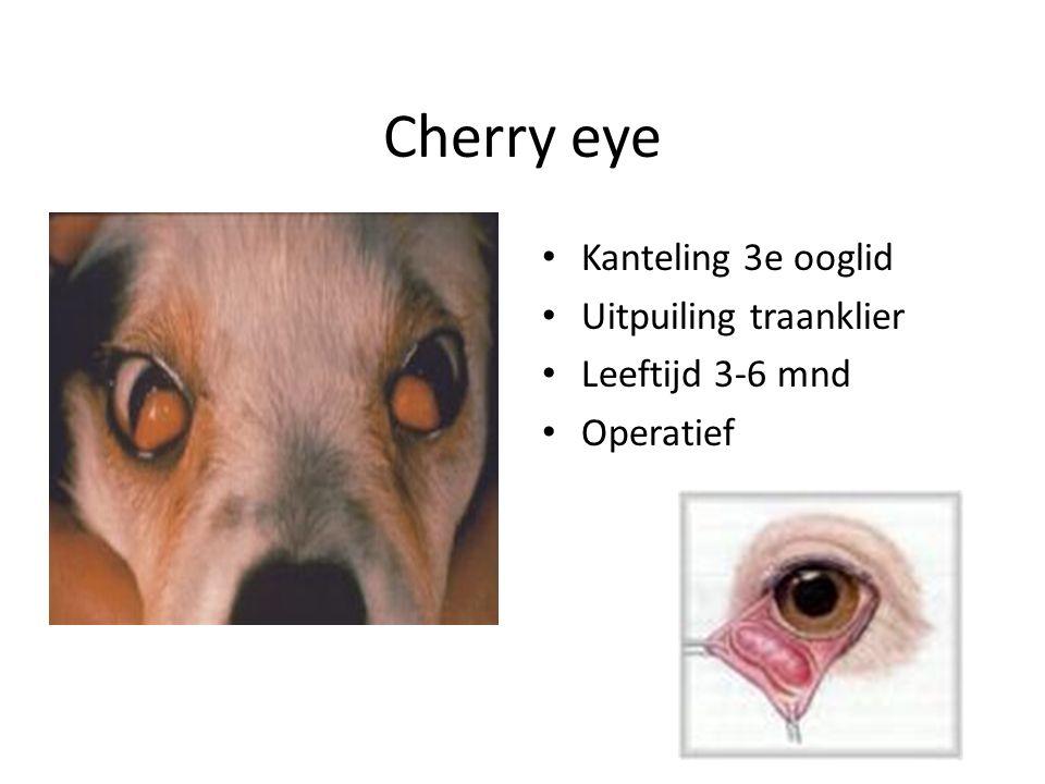 Cherry eye Kanteling 3e ooglid Uitpuiling traanklier Leeftijd 3-6 mnd Operatief