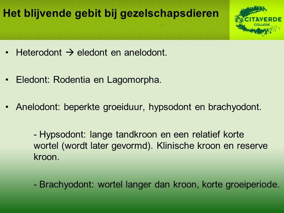 Heterodont  eledont en anelodont.Eledont: Rodentia en Lagomorpha.