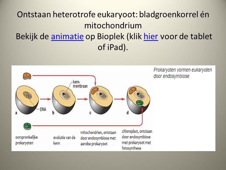 Ontstaan heterotrofe eukaryoot: bladgroenkorrel én mitochondrium Bekijk de animatie op Bioplek (klik hier voor de tablet of iPad).animatiehier