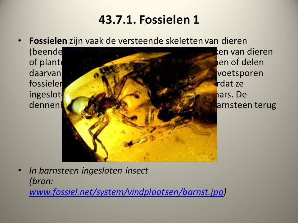 43.7.1. Fossielen 1 Fossielen zijn vaak de versteende skeletten van dieren (beenderen, schelpen), maar soms ook afdrukken van dieren of planten. Zo ku