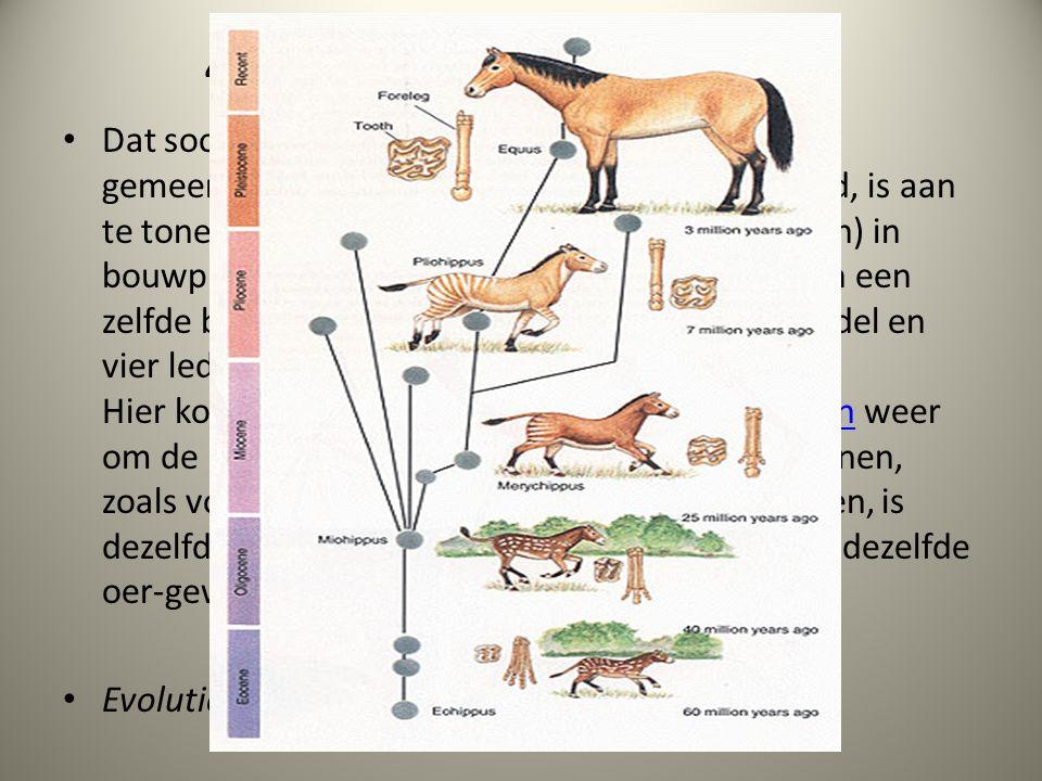 43.7.5. Bouwplannen vergelijken Dat soorten zich in de loop van de tijd uit een gemeenschappelijke voorouder hebben gevormd, is aan te tonen door de o