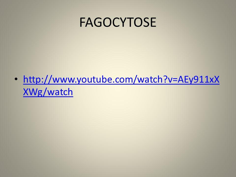 FAGOCYTOSE http://www.youtube.com/watch?v=AEy911xX XWg/watch http://www.youtube.com/watch?v=AEy911xX XWg/watch