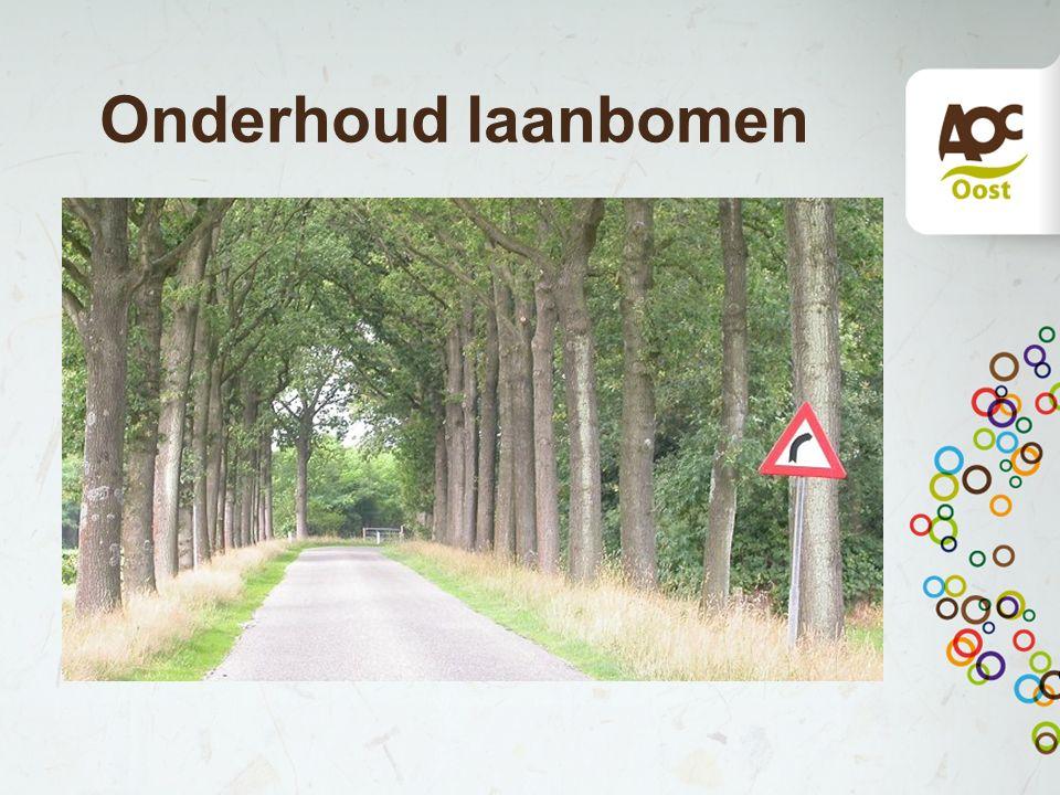 Laanbomen Laanbomen zijn bomen die men vaak langs lanen, wegen en straten plant, zoals eik, beuk, iep, berk en plataan.