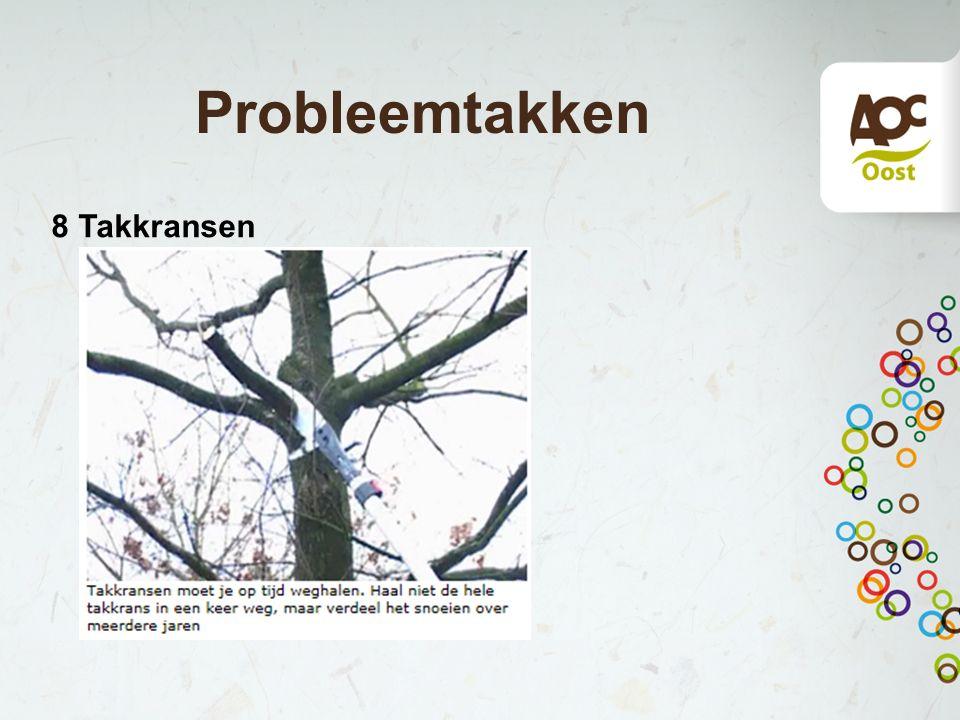 Probleemtakken 8 Takkransen