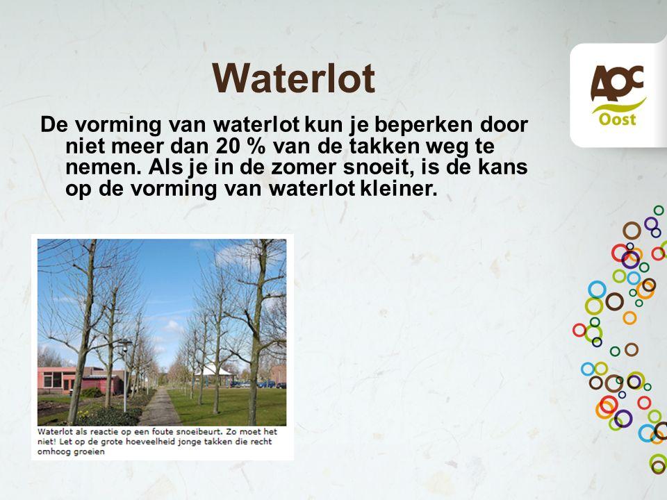Waterlot De vorming van waterlot kun je beperken door niet meer dan 20 % van de takken weg te nemen.