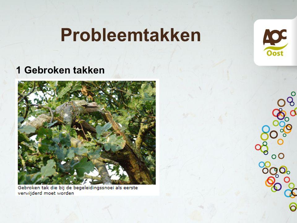 Bijzonderheden Eik: goede begeleidingssnoei heeft snel last van probleemtakken.