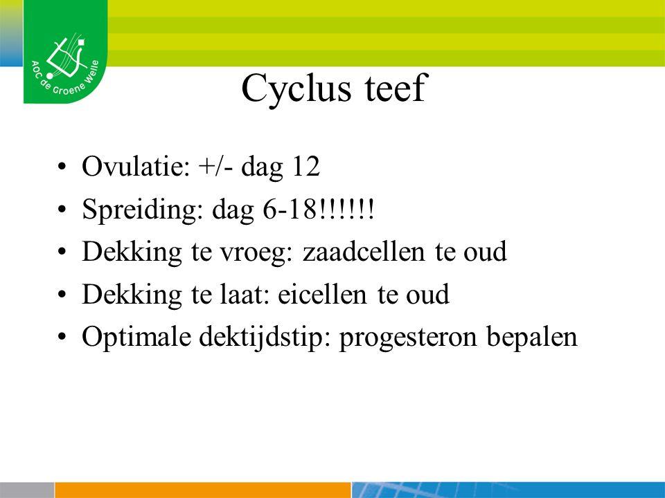 Cyclus teef Loopsheid +/- 18 dagen Pro oestrus +/- 9 dagen: zwelling vulva, bloederige uitvloeiing, aantrekkelijk voor reu, laat dekking niet toe Oestrus +/- 9 dagen: heldere uitvloeiing, aantrekkelijk voor reu, laat dekking toe Met oestrus: 2 maanden na oestrus (idem dracht!) Anoestrus: inactieve periode tussen loopsheden