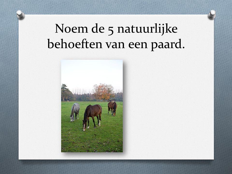 Noem de 5 natuurlijke behoeften van een paard.