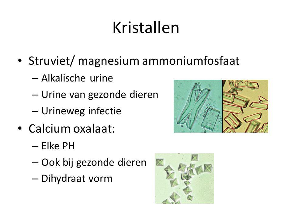 Kristallen Struviet/ magnesium ammoniumfosfaat – Alkalische urine – Urine van gezonde dieren – Urineweg infectie Calcium oxalaat: – Elke PH – Ook bij