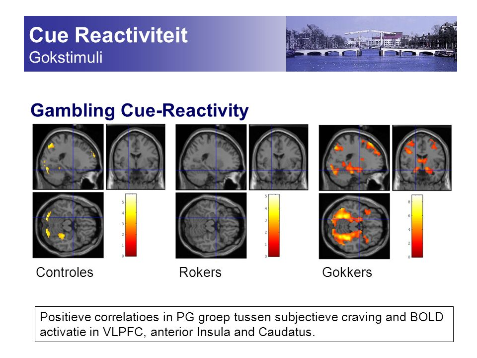 Cue Reactiviteit Gokstimuli Gambling Cue-Reactivity ControlesRokersGokkers Positieve correlatioes in PG groep tussen subjectieve craving and BOLD activatie in VLPFC, anterior Insula and Caudatus.
