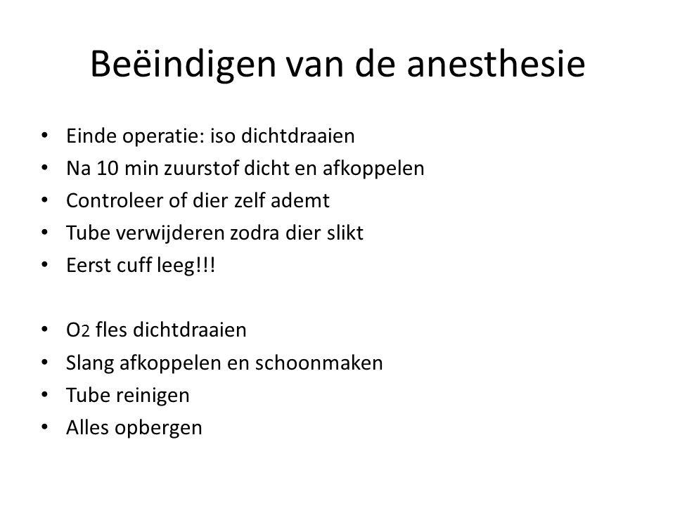 Beëindigen van de anesthesie Einde operatie: iso dichtdraaien Na 10 min zuurstof dicht en afkoppelen Controleer of dier zelf ademt Tube verwijderen zo