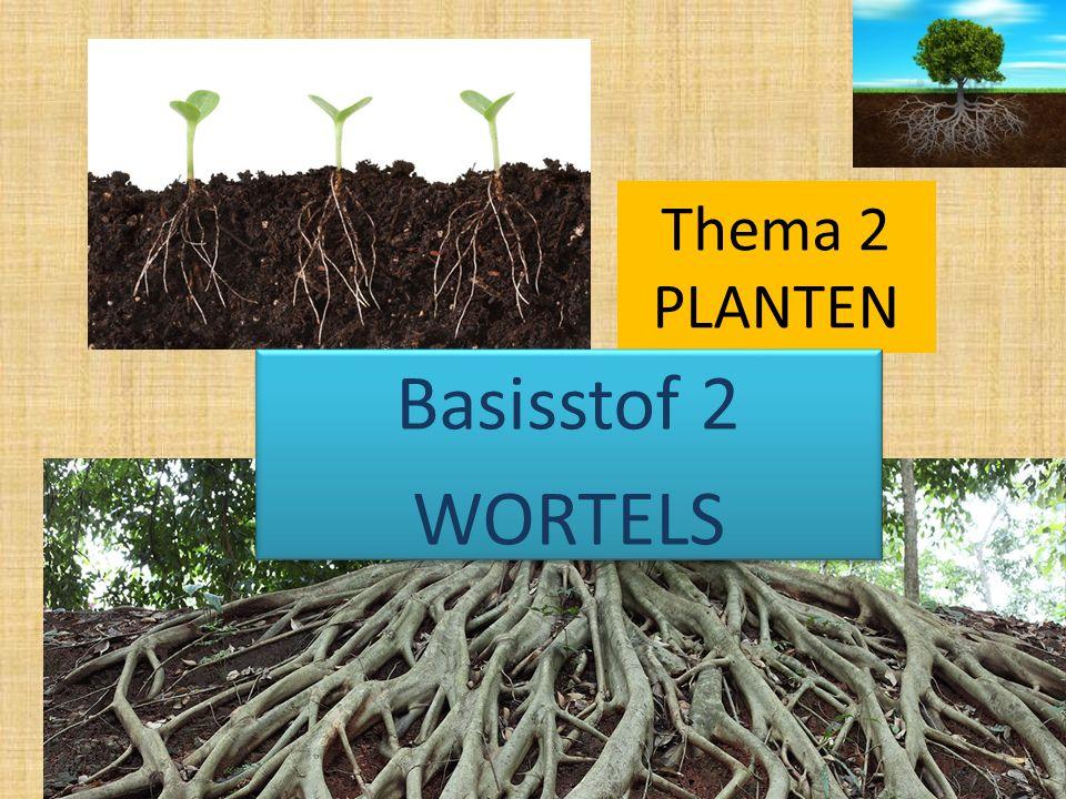 Thema 2 PLANTEN Basisstof 2 WORTELS Basisstof 2 WORTELS