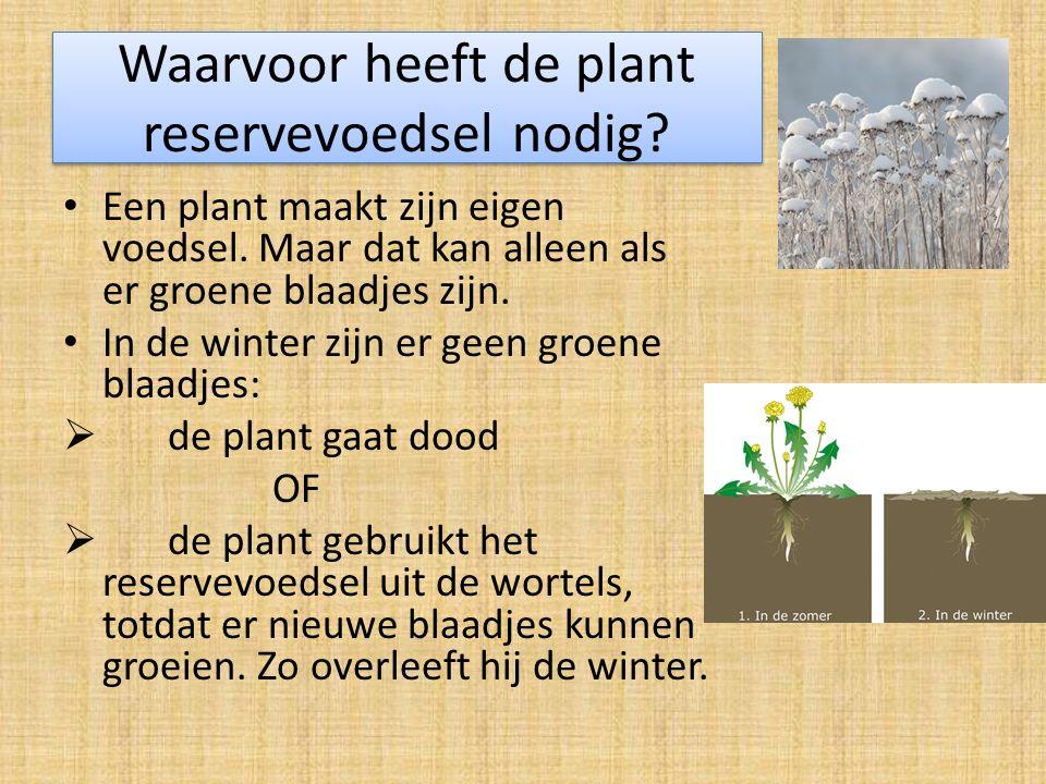Waarvoor heeft de plant reservevoedsel nodig.Een plant maakt zijn eigen voedsel.