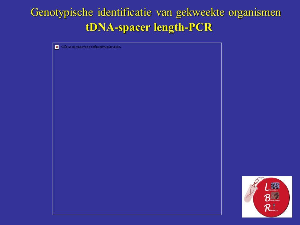 tDNA-spacer length-PCR Genotypische identificatie van gekweekte organismen